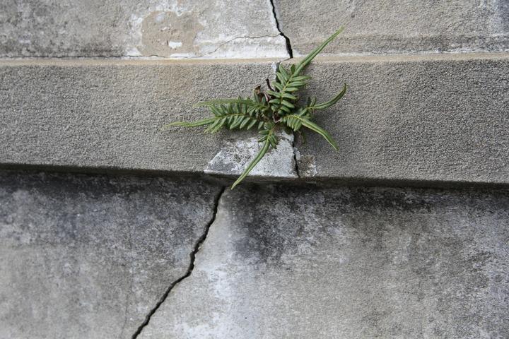 Concrete Repair - Fixing Concrete Cracks - A useful guide