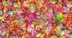 autumn-leaves-anti-slip