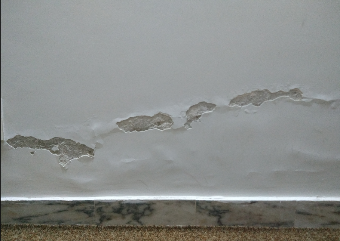 Rising damp is dangerous, can spread, you need to repair the damage quickly